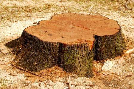Thompson Tree Surgery Stump Grinding Removal