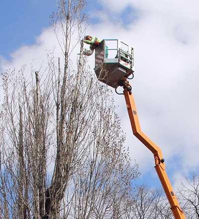 Thompson For Trees Tree Maintenance